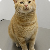 Adopt A Pet :: Teller - Springfield, IL