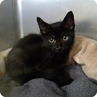 Adopt A Pet :: Fredrick - Ashtabula, OH