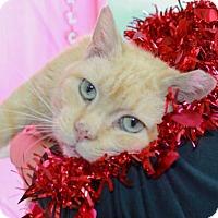 Adopt A Pet :: Brownie - Erwin, TN