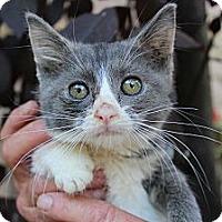 Adopt A Pet :: malory - Santa Monica, CA