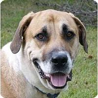Adopt A Pet :: Conga - Mocksville, NC