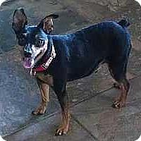 Adopt A Pet :: Roscoe - Columbus, OH