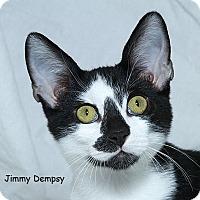 Adopt A Pet :: Jimmy Dempsy - Sacramento, CA