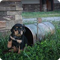 Adopt A Pet :: Brock Evans - Russellville, KY