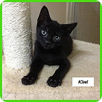 Adopt A Pet :: Kiwi - Miami, FL