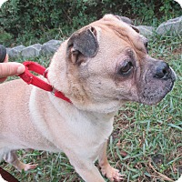 Adopt A Pet :: Brownie - Orange Park, FL