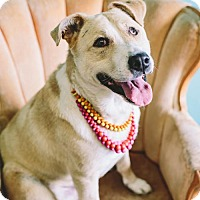Adopt A Pet :: Marley - San Francisco, CA
