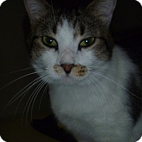 Adopt A Pet :: Lex - Hamburg, NY