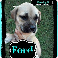 Adopt A Pet :: Ford Adoption pending - East Hartford, CT