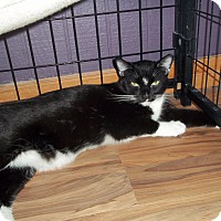 Adopt A Pet :: TUX - YOUNGTOWN, AZ