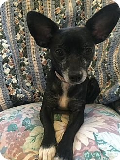 Chihuahua Mix Dog for adoption in Tomball, Texas - Minnie