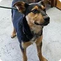 Adopt A Pet :: Pegasus - Lewisburg, TN