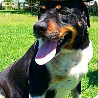 Adopt A Pet :: Diego - N - Huntington, NY