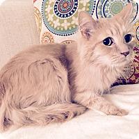 Adopt A Pet :: Peanuts - Addison, IL