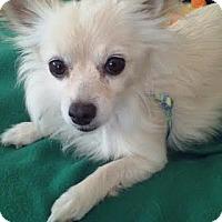 Adopt A Pet :: ~COURTESY POST~ Baby - Philadelphia, PA