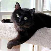 Adopt A Pet :: Inky - Fairfax, VA