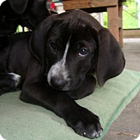 Adopt A Pet :: Morrison - PENDING - Grafton, WI