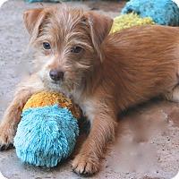 Adopt A Pet :: Fajita - Woonsocket, RI