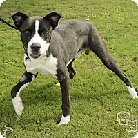 Adopt A Pet :: McCoy - Stillwater, OK