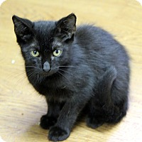 Adopt A Pet :: Toothless - Little River, SC