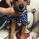 Adopt A Pet :: Tim