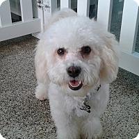 Adopt A Pet :: Kasira - Thousand Oaks, CA