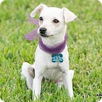 Adopt A Pet :: Pear - Santa Fe, TX