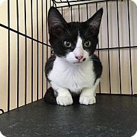Adopt A Pet :: Checkers - East Brunswick, NJ
