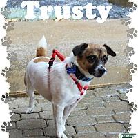 Adopt A Pet :: Trusty - Fallston, MD