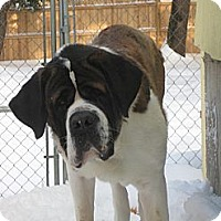 Adopt A Pet :: CHUMLEY - ADOPTION PENDING - Sudbury, MA