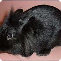 Adopt A Pet :: Tootsie - Maple Shade, NJ