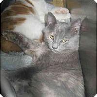 Adopt A Pet :: Auntie Niemi - Lombard, IL