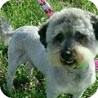 Adopt A Pet :: Quinten - Austin, TX