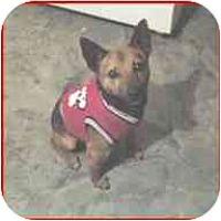 Adopt A Pet :: Jorgi Boy - Raymond, NH