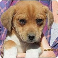 Adopt A Pet :: Tillie - Westbrook, CT