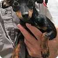 Adopt A Pet :: Harmony - Columbus, OH