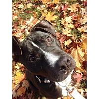 Adopt A Pet :: Locke - Hollywood, FL