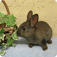 Adopt A Pet :: Charcoal - Bonita, CA