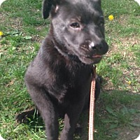 Adopt A Pet :: Clyde - Wappingers, NY