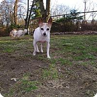 Adopt A Pet :: Pansy - Mount Gretna, PA