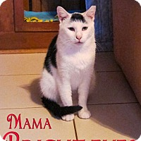 Domestic Shorthair Cat for adoption in Middletown, New York - Mama Bright Eyes