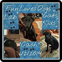 Adopt A Pet :: Cash -DM - Orlando, FL