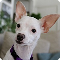 Adopt A Pet :: Moon - Redondo Beach, CA
