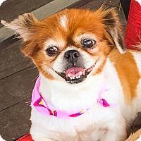 Adopt A Pet :: Peaches - Miami, FL