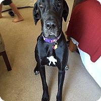 Adopt A Pet :: Sheba - Austin, TX