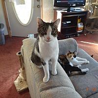 Adopt A Pet :: Taylor - Saint Albans, WV