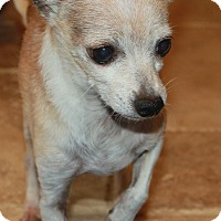 Adopt A Pet :: Vince - Buckeye, AZ