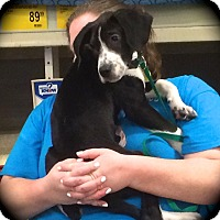 Adopt A Pet :: Wesson - Ijamsville, MD