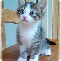 Adopt A Pet :: Zeal - Shippenville, PA