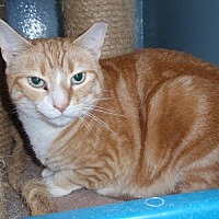 Adopt A Pet :: Gretel - Ashland, MA